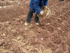 有机肥厂家